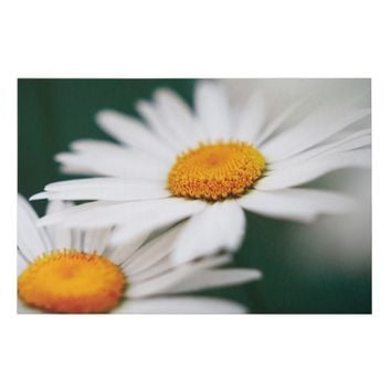Two pretty daisies. faux canvas print