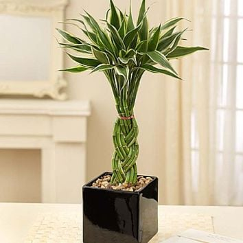Modern Bamboo from 1-800-FLOWERS.COM-18947
