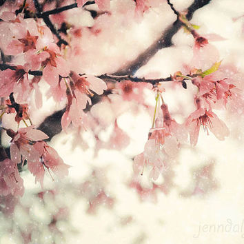 Whisper - fine art photograph, cherry blossom photo, cherry blossoms, pastel pink floral decor, nursery art, cherry blossom photograph