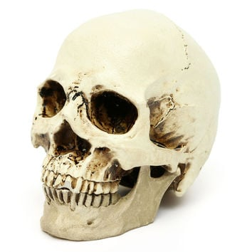 New Model Gifts Resin White Head Skull Halloween Props Small Human Skull Replica Haunted House Room Escape Horrible Supplies