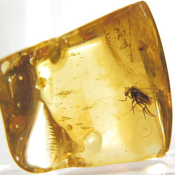 Fossil of an insect in the Baltic amber. EM345