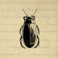 Printable Image Beetle Graphic Beetle Illustration Digital Insect Download Antique Clip Art for Transfers etc HQ 300dpi No.3246