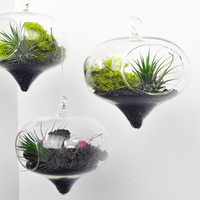 Set of three Diamond Terrariums - Air Plant - Hanging Glass - Green Gift - Home Decoration
