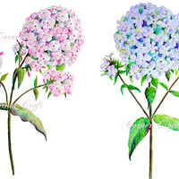 hand painted watercolour phlox pink and blue flowers digital clipart printable instant download scrapbook watercolor