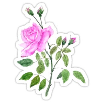 pink rose watercolor painting by ColorandColor