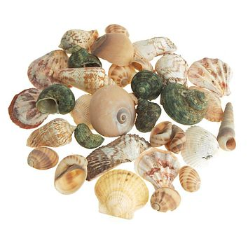 Decorative Sea shells Assortment Vase Filler, 20-piece