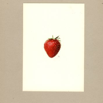 Strawberries, Starbright