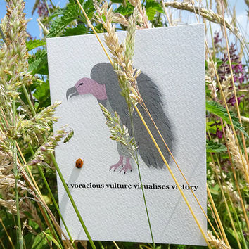 Animal card, voracious vulture, this gorgeous notecard comes complete with an alliterative tongue-twisting phrase to boot