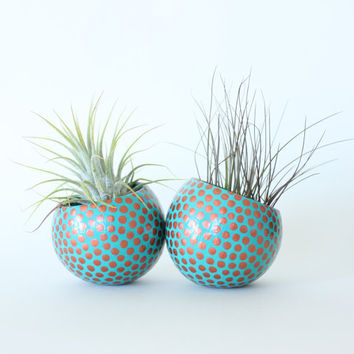 Air Plant Planter with Air Plant - Teal with Copper Spots. Teal and Copper Dots. Hostess Gift. Mother's Day Birthday Gift Idea