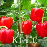 Hot Selling 100pcs Red Sweet Pepper Seeds, Vegetable Seeds, Bell Pepper Seeds, Bonsai Pot Home Garden,63UWFJ