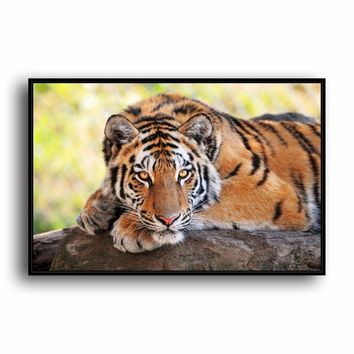 SR--0489 Bengal Tiger Natural Scenery Animal. HD Canvas Print Home decoration Living Room bedroom Wall pictures Art painting