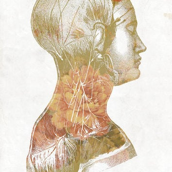 Inside Girl - 12x18 FREE SHIPPING Flowers Floral Insides Vintage Medical Diagram Science Veins Muscles Archival Poster Print
