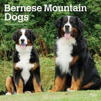 Bernese Mountain Dogs Wall Calendar, Bernese Mountain Dog by BrownTrout