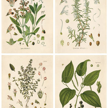 Botanical Herb Print Set. Kitchen Art Posters Set of 4. Vintage Fresh Herbs Plants flowers Vintage art prints gallery wall  CP288