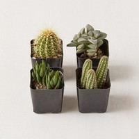 "2"" Live Assorted Hardy Plant - Set of 4 