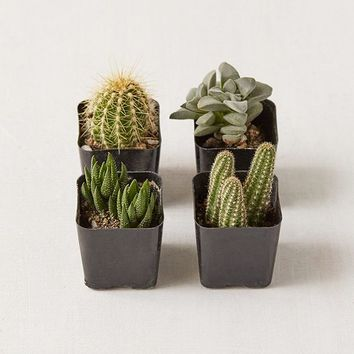 """2"""" Live Assorted Hardy Plant - Set of 4 