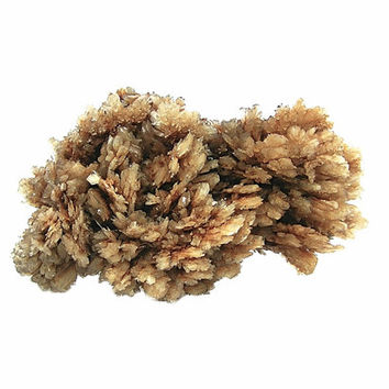 Gypsum Selenite Golden Brown Feather Crystal Cluster Terminated Natural Platy Crystals Display Specimen for your rock and mineral collection