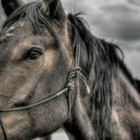 DARK HORSE unique photography 8x12 Fine Art by ApplesAndOats