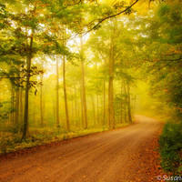 Nature Photography, Golden Morning, Fall Colors, Fog, Road, Autumn Photo, Fine Art Print, Magical, Enchanted Forest, Fairy Land, Home Decor