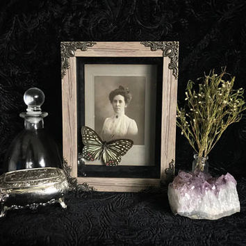 Victorian Cabinet Card Butterfly Shadow Box, Real Butterfly, Taxidermy, Framed Butterfly, Victorian, Memento Mori, Gothic Decor, Oddity