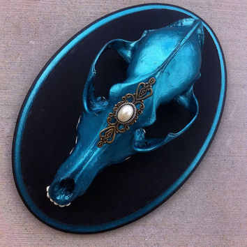 Turquoise teal metallic coyote skull mount real taxidermy curio oddity