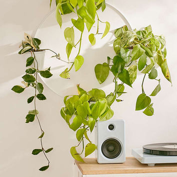 Multi Herb Wall Planter - Urban Outfitters