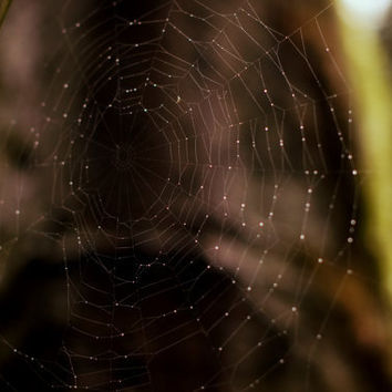 Fine Art Photo : 8 x 10 Spiderweb spooky deep purple fall print - rustic nature based home decor wall art