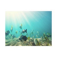 School of Fish Swimming Under Water Canvas Print