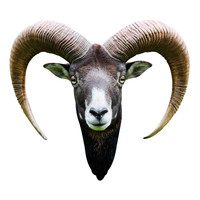 Long Horned Goat Mount Wall Decal