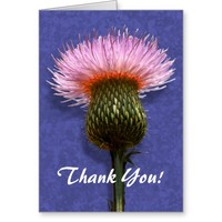 Spiky Pink Thistle Flower Thank You Greeting Card