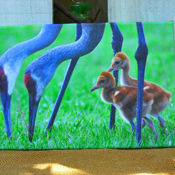 Holiday Gifts Nature 8x12 Wall Art-SANDHILL CRANE FAMILY-Gift for Her,Hostess Gift,Housewarming, Gift for Him,Audubon Society,Bird Watchers