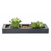 Creative Branch WG37804 Succulents Faux Echeveria w/ Acrylic Water