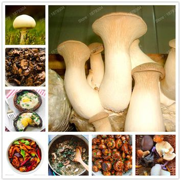 delicious green vegetable rare mushroom seed organic Healthy edible Vegetable seed bonsai plant in garden and courtyard 400pcs