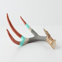 Colorblocked Antler Curio