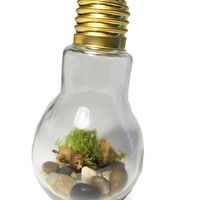Recycled Lion Light bulb Terrarium