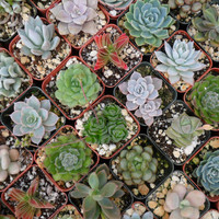 8 Succulents And Cactus Plants, Great Table Favors, Make A Terrarium, Centerpiece