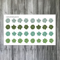 Beautiful Succulent Stickers [119]