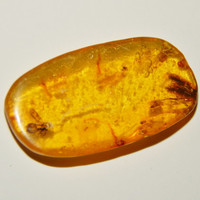 Genuine AMBER with INSECT FOSSIL Inclusion - Genuine Dominican Republic Amber - Insect Fossil - Tumbled Amber - Real Fossils - Gemstones