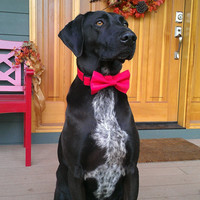 Red Tuexdo Dog Collar with bow tie set (Mini,X-Small,Small,Medium ,Large or X-Large Size)- Adjustable