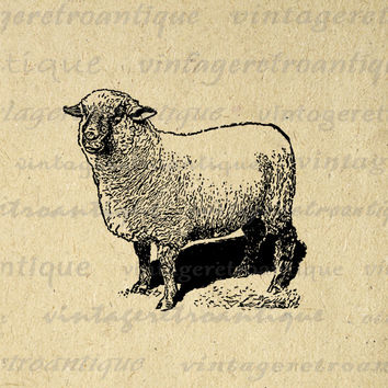 Digital Printable Antique Sheep Image Farm Animal Download Graphic Vintage Clip Art for Transfers Printing etc HQ 300dpi No.3187