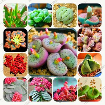 200 / bag Mix Succulents Seeds, Rare cactus hybrid bonsai seeds, lotus Lithops seed, Bonsai plants Seeds Flower pots planters