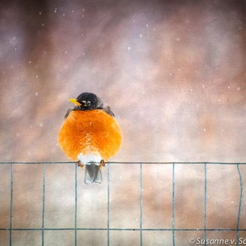 Kid's Wall Art, Robin on Fence, Spring Bird, Nature Photography, Fine Art Print, Orange Red, Snowflakes, Whimsical, Home Decor