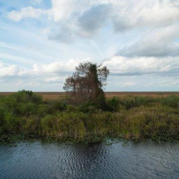 Tree In The Everglades - Art Print