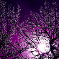 Halloween decor creepy tree purple violet sky full moon winter night spooky trick or treat ice storm vampire true blood - Howl 8x8