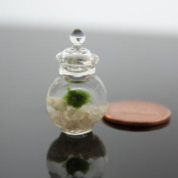 "marimo aquarium- EXTREME miniature ,smallest aquarium , 3/4 in tall micro miniature aquarium , japanese "" moss ball"""