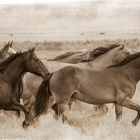 Horse Photography - Horses in Countryside, Sepia Nature Photograph, Wall Decor