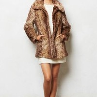 Adani Coat by Anthropologie Brown Xs P Apparel