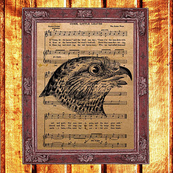Vintage bird print Animal poster Falcon decor Music sheet art