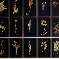 Hand-Pressed Botanicals on Linen | Restoration Hardware