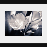 Black and White Silver Flower Art Print Flower Photography Nature New Zealand Modern Rustic Home Decor